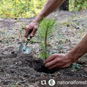 Plant Trees With National Forest Foundation