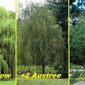 Three Types of Weeping Willows