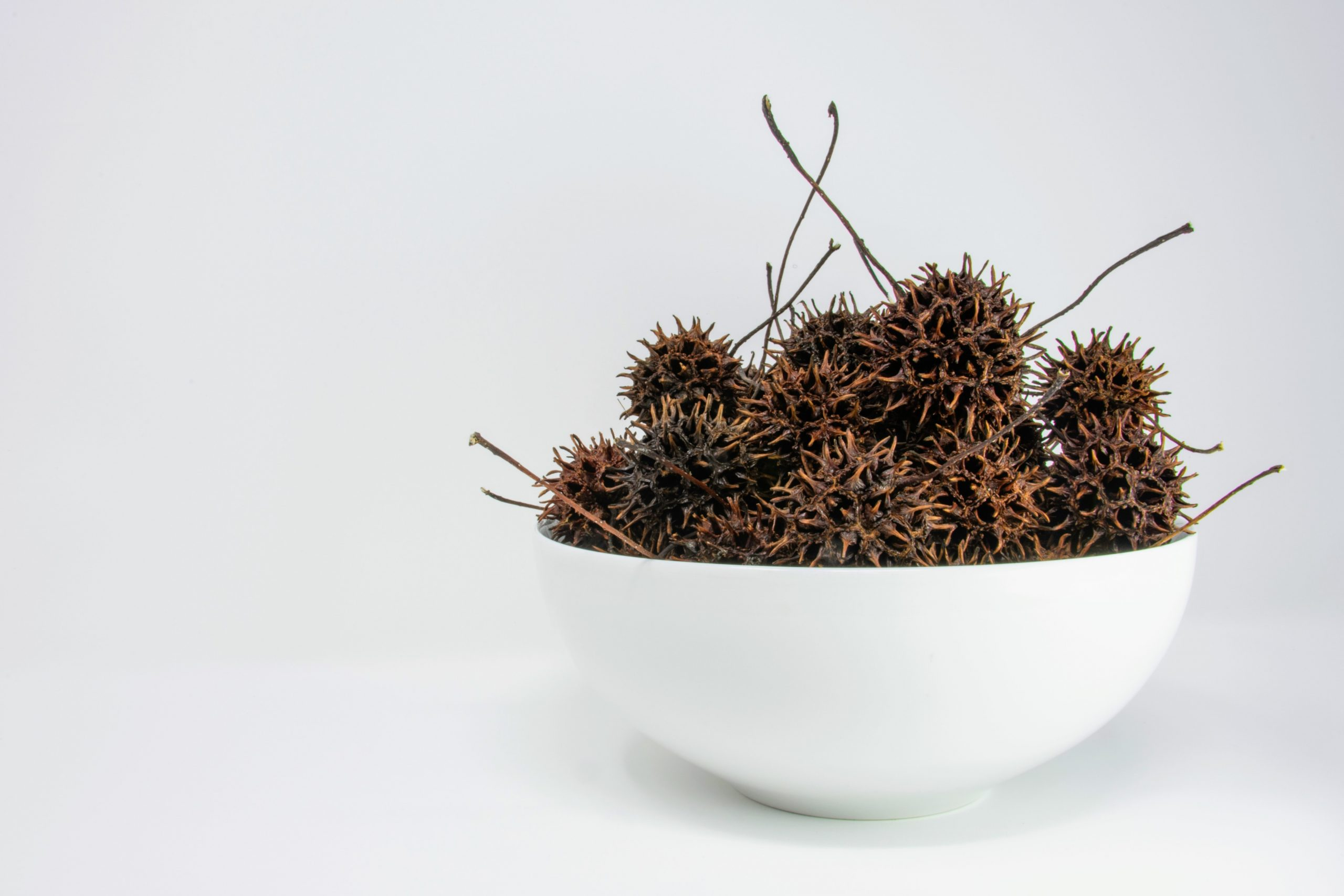 Witches Burrs from sweet gum tree