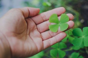 four leaf clover in a hand