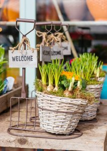 flower bulbs in basket with welcome sign