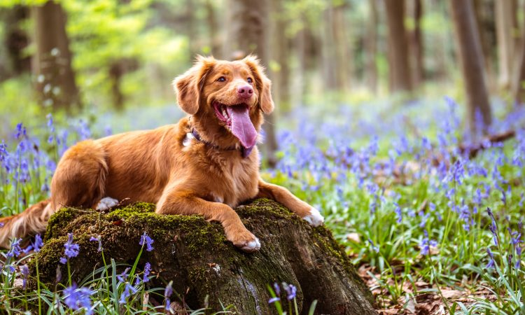 Dog in field with blooming flowers